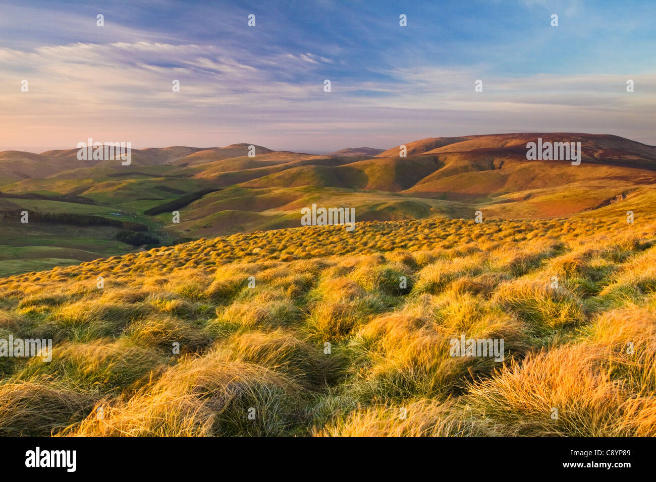 View from Windy Gyle on the Border Ridge and Pennine Way in the Northumbrian Cheviot Hills, England - Stock Image