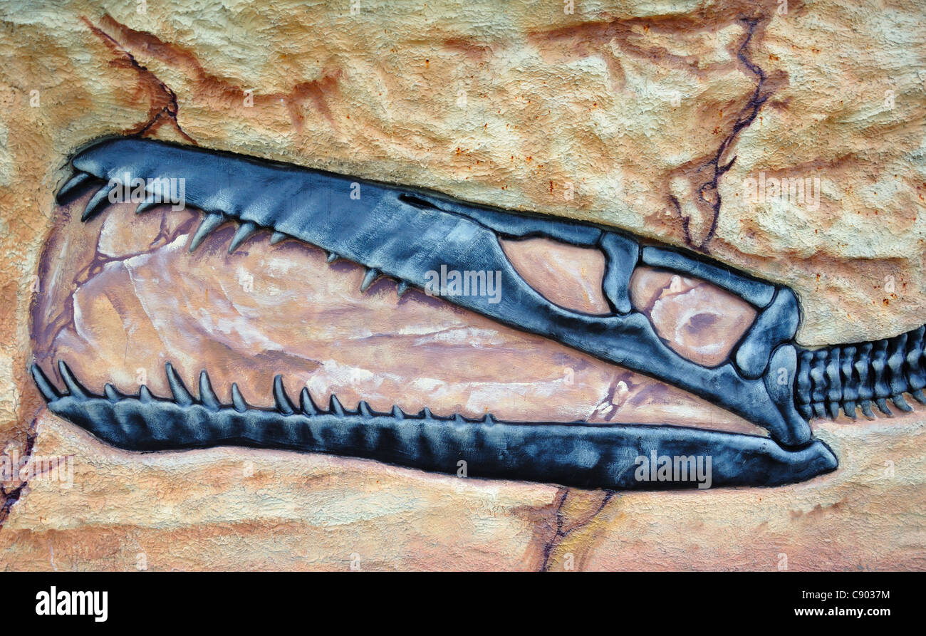Dinosaur skull fossil. - Stock Image