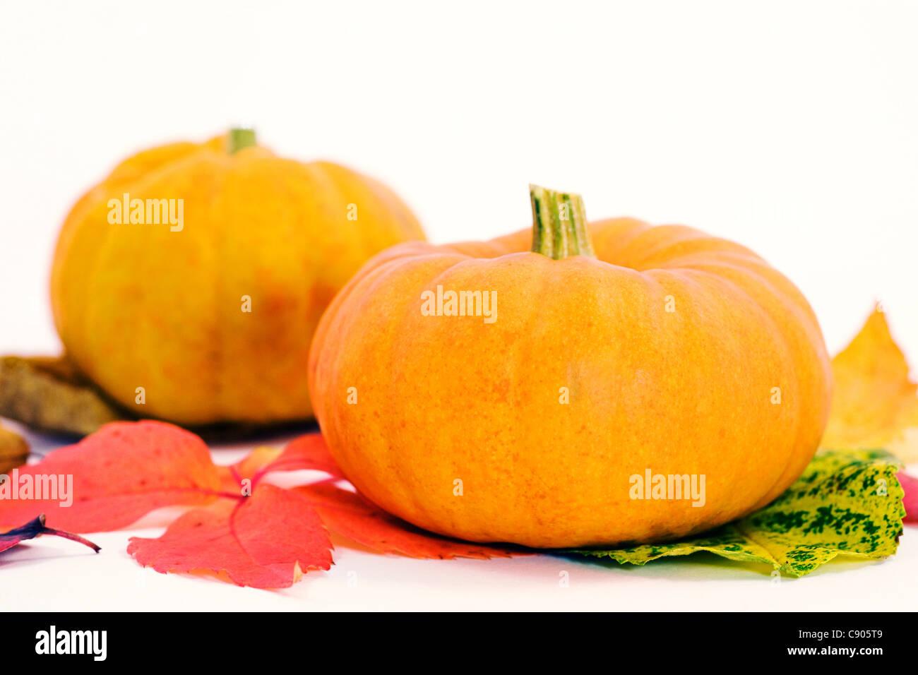 Cucurbita. Mini pumpkins on Autumn leaves. - Stock Image