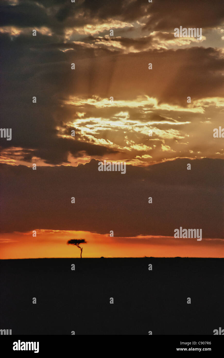 Dramatic Clouds, Sunset Sky, Light Beams and Acacia Tree on the Masai Mara, Kenya, Africa - Stock Image