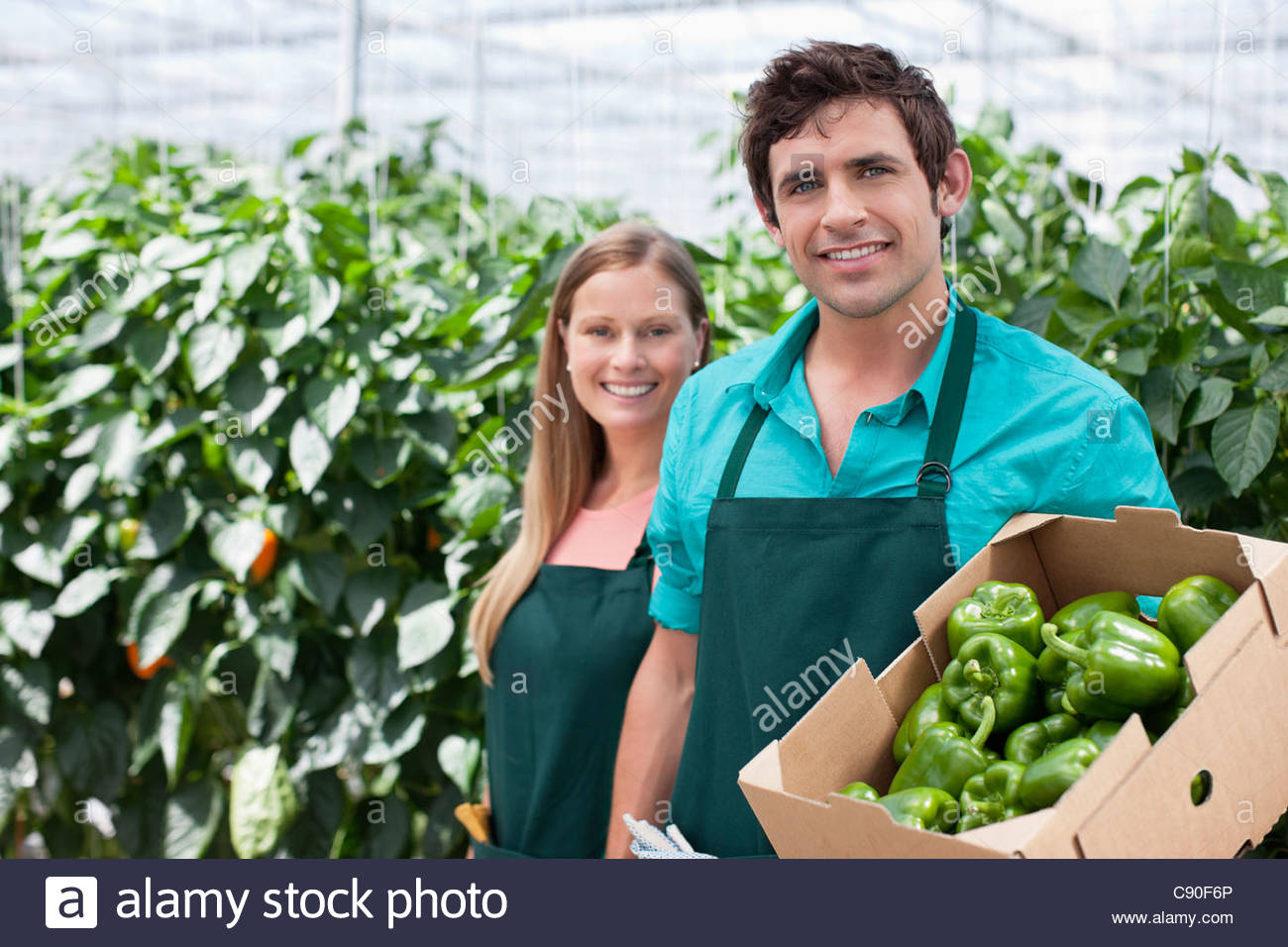 Workers with produce in greenhouse - Stock Image