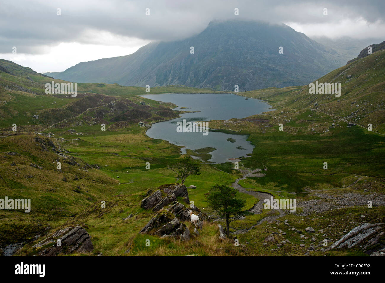 Ascent to Glyder Fawr, view to lake Llyn Idwal, Snowdonia National Park, Wales, UK - Stock Image