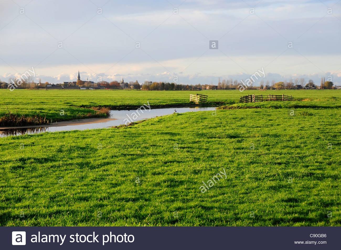Polder areas, landscape between Gouda and Bodegraven, Reeuwijk, Holland, Nederland, the Netherlands - Stock Image