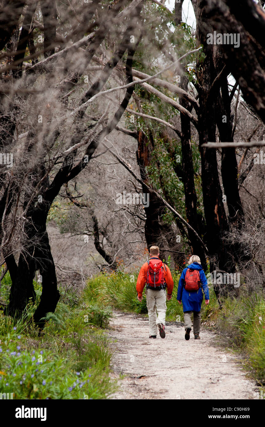 Track to Lilly Pilly Gully, Wilsons Promontory National Park, Victoria, Australia - Stock Image