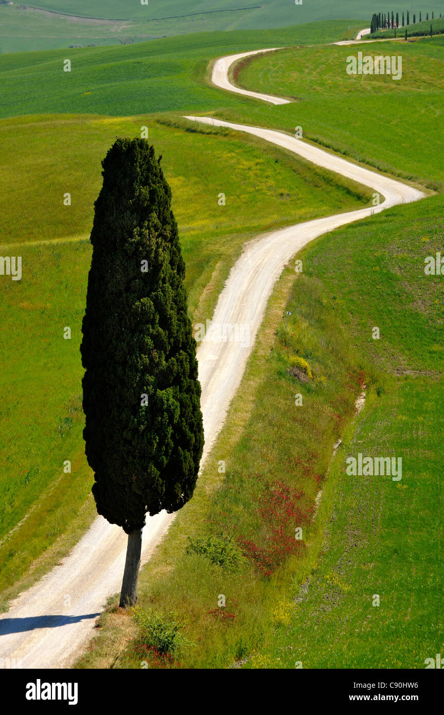 Remote country road with cypresses, Crete, Tuscany, Italy, Europe - Stock Image