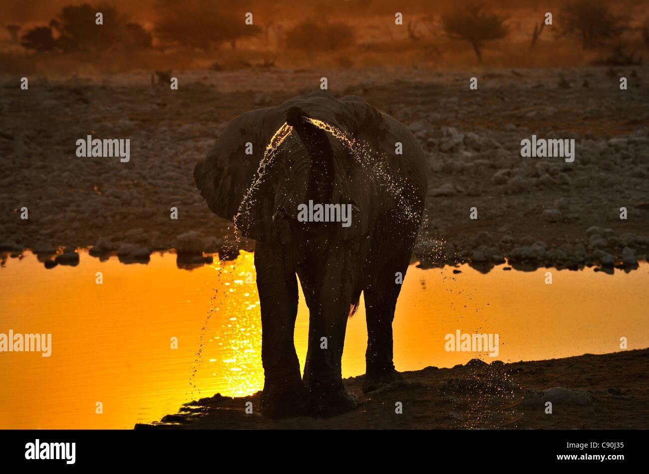 Elephant at waterhole at sunset, Etosha National Park, Namibia, Africa - Stock Image