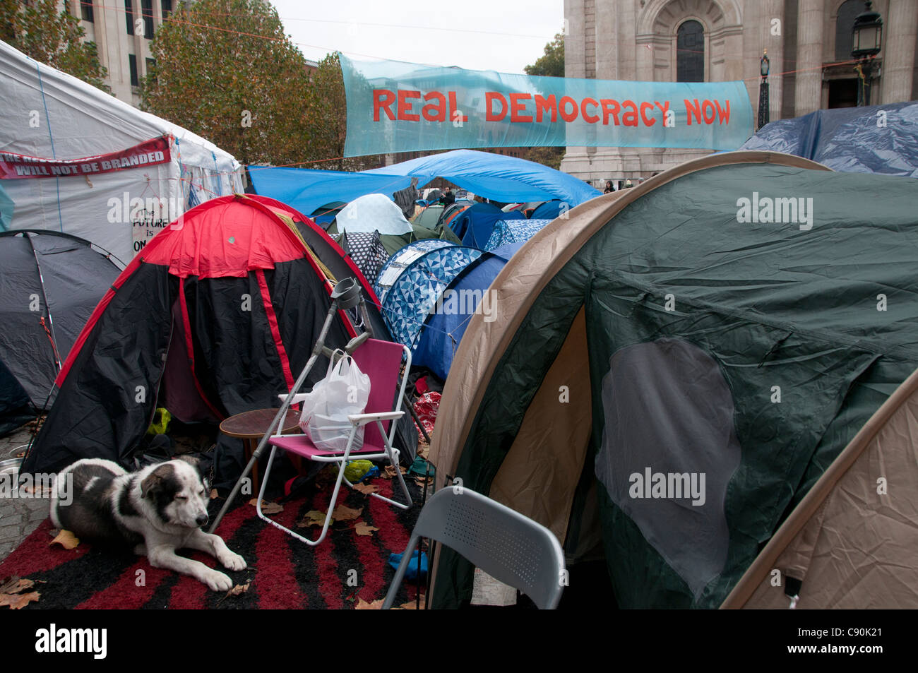 Occupy London. St Paul's. Protest against the city and banks. Dog resting in front of a tent - Stock Image