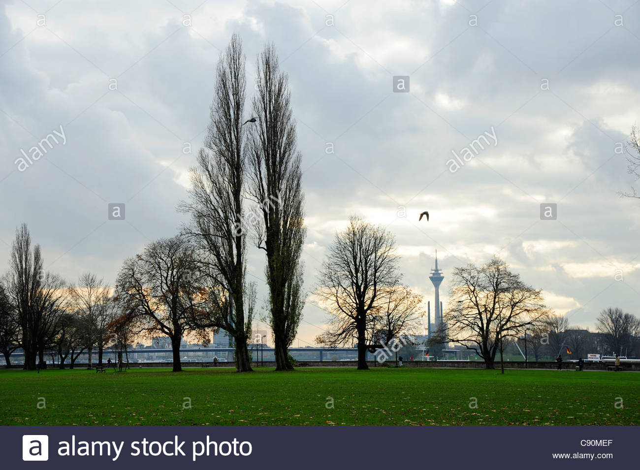 Trees in the Rheinpark in autumn, Pempelfort quarter, Duesseldorf, Duesseldorf, Rhineland, NRW, North Rhine-Westphalia, - Stock Image