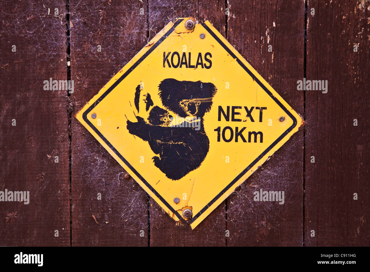 Koala bear warning sign from Australia screwed to a wooden fence in England, UK - Stock Image
