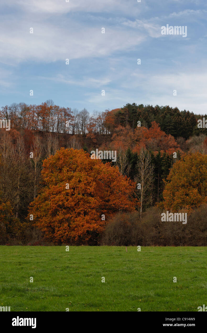 Landscape at Les Ardennes in autumn - Stock Image