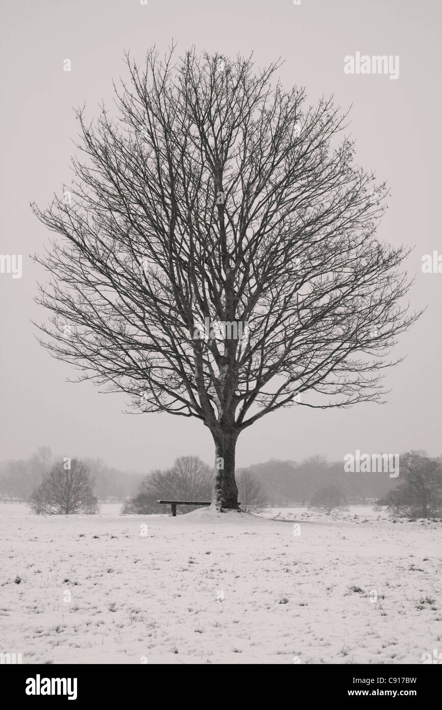 Richmond Park is a royal park a Site of Special Scientific Interest a National Nature Reserve and a Special Area - Stock Image