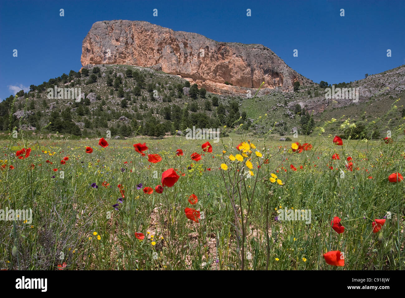 Penarrubia or Ruby Rock is a landmark rock outcrop overlooking the wild flowers of the fields of the hill country - Stock Image