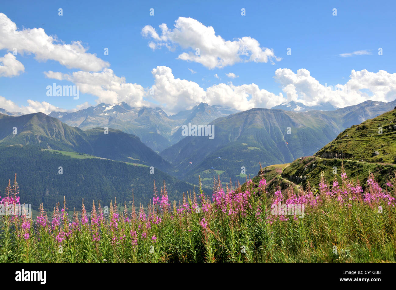 Wildflower meadow, Fiescheralp, Canton of Valais, Switzerland - Stock Image