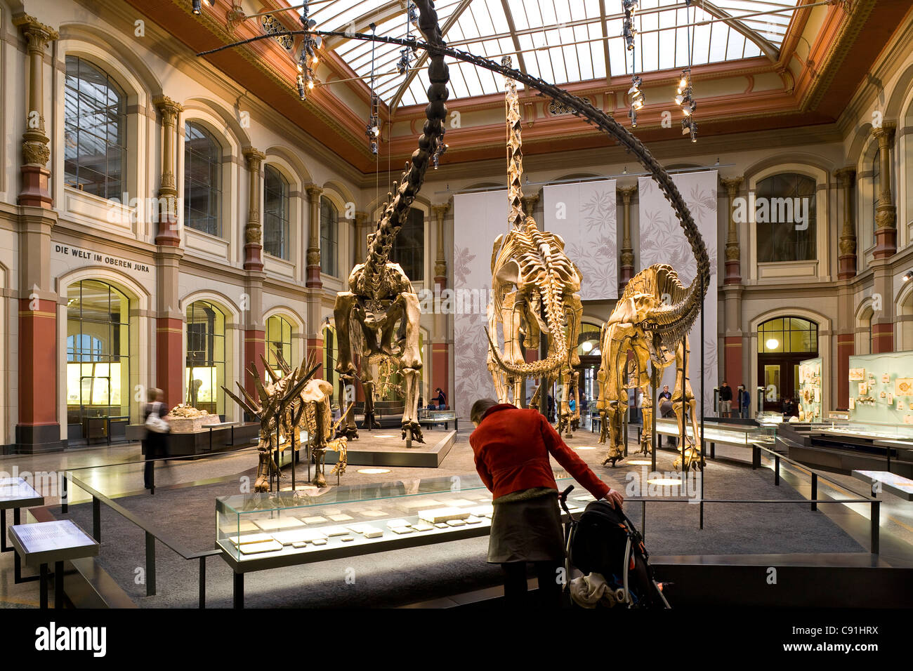 Skeletons of dinosaurs at Berlin Museum of Natural History, Invalidenstrasse, Berlin-Mitte, Berlin, Germany, Europe - Stock Image