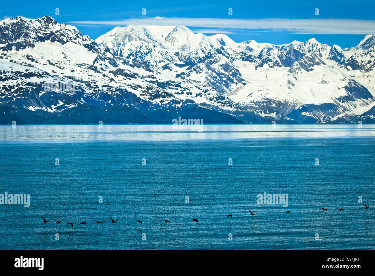 Scenic view of the Fairweather Range and Tarr Inlet with Black Scoters in the foreground, Glacier Bay National Park - Stock Image
