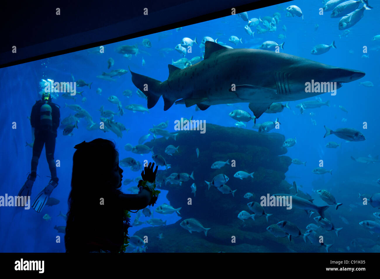 Girl looking at shark, Palma Aquarium, Mallorca, Balearics, Spain - Stock Image