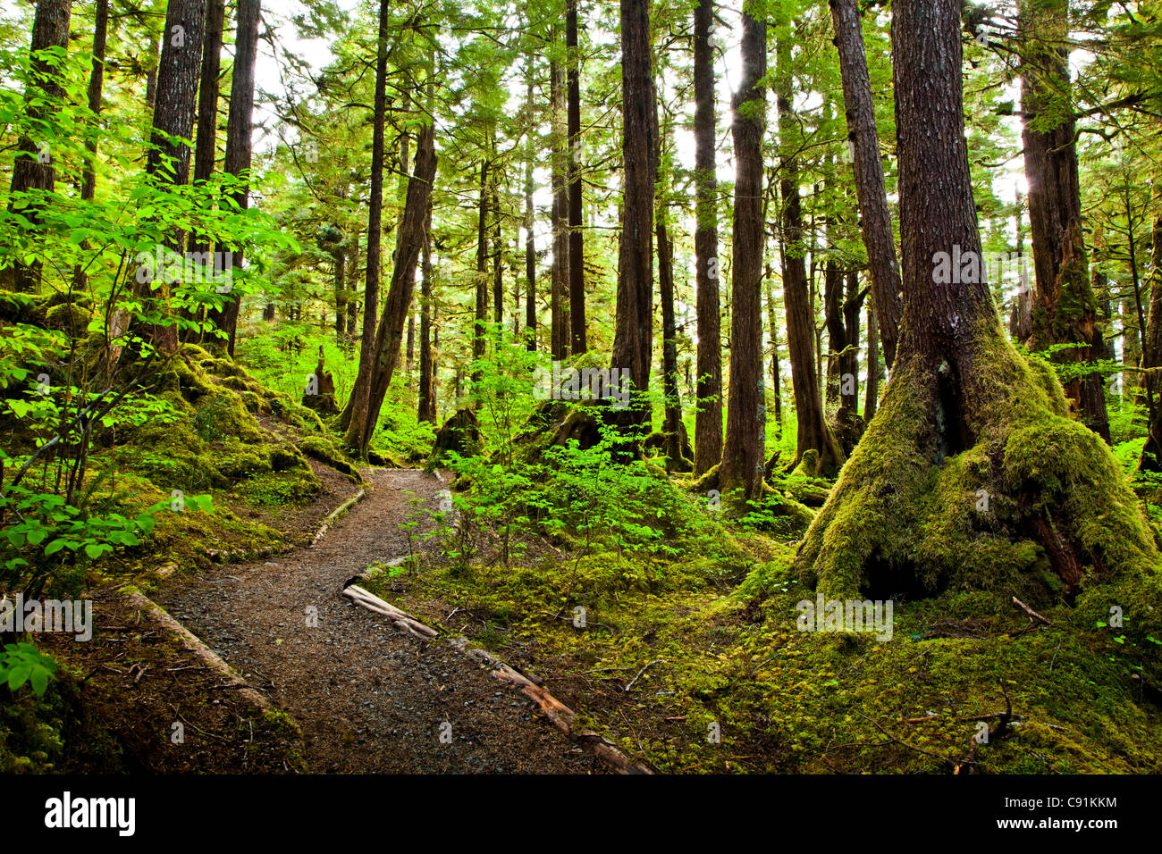 Lunch Falls Loop Trail winds through a temperate rainforest, Settler's Cove State Recreation Site, Ketchikan, - Stock Image
