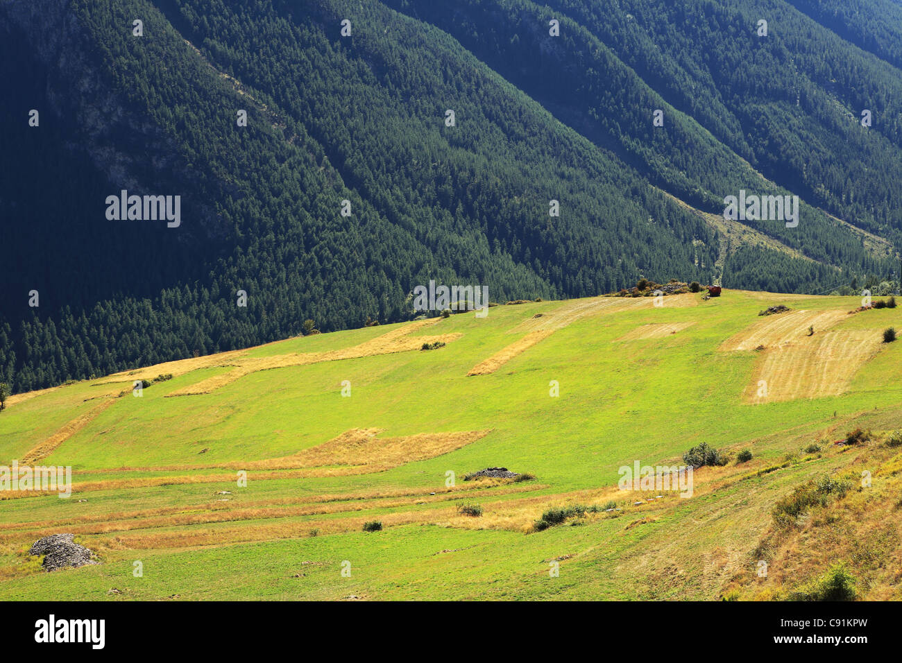View on beautiful alpine meadow against mountain downhill in Alps, Northern Italy. - Stock Image