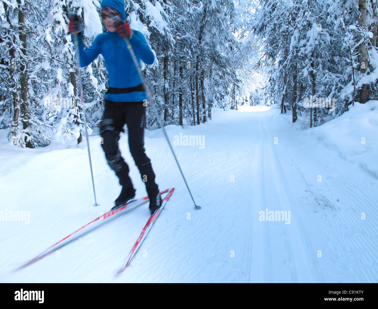 Woman nordic skate skiing through trees on the Chester Creek trail, Anchorage, Southcentral Alaska, Winter - Stock Image