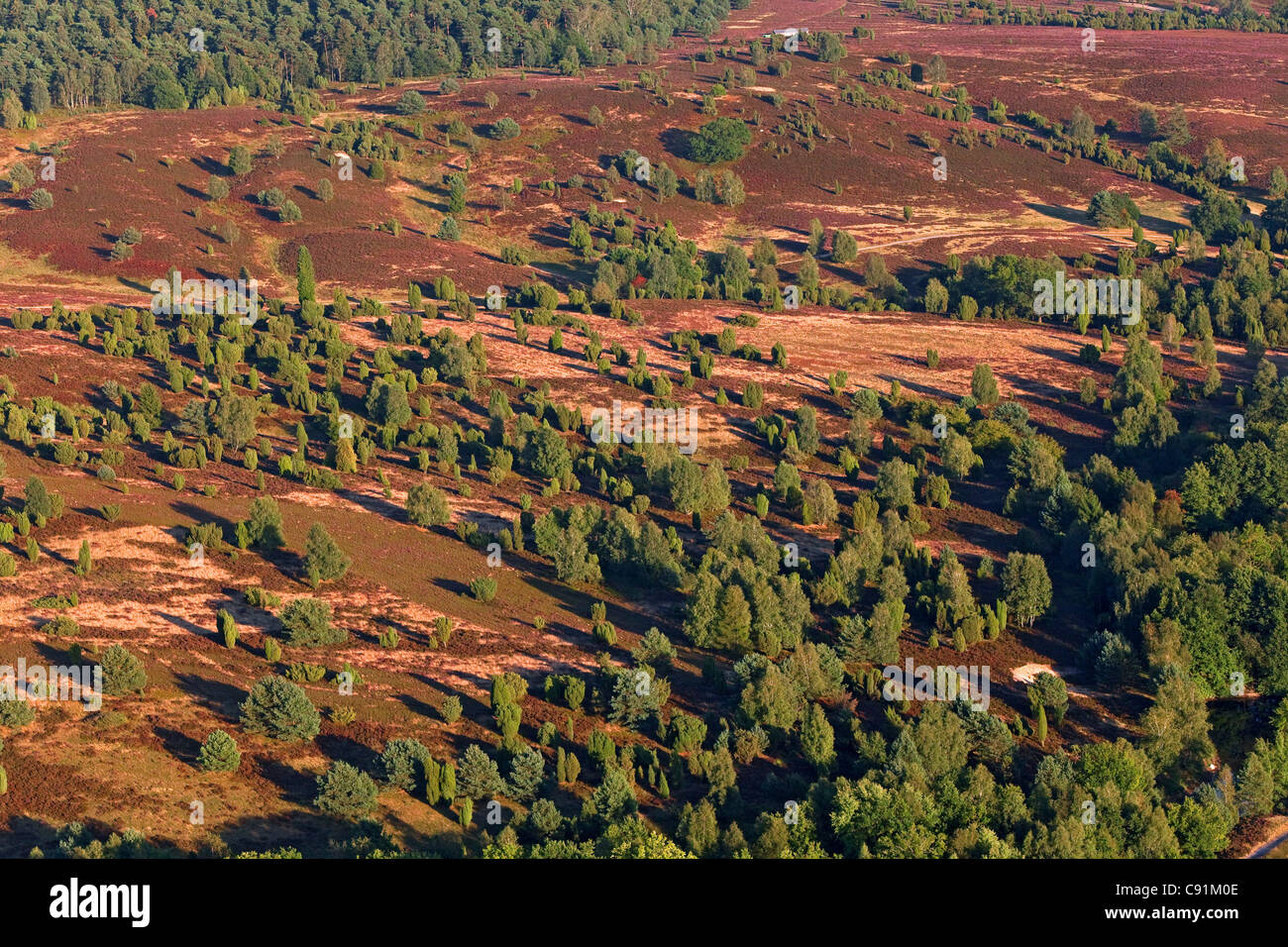 Aerial photo of the Lueneburg heath, nature reserve, Lower Saxony, Germany - Stock Image
