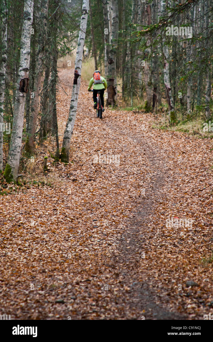 Woman mountain biking on a leaf covered trail amongst Birch and Spruce trees at the Campbell Tract in Anchorage, - Stock Image