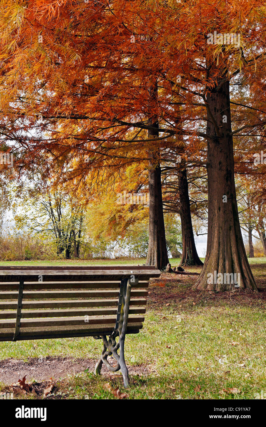Park bench under autumn trees in a park on Lake Varese - Stock Image