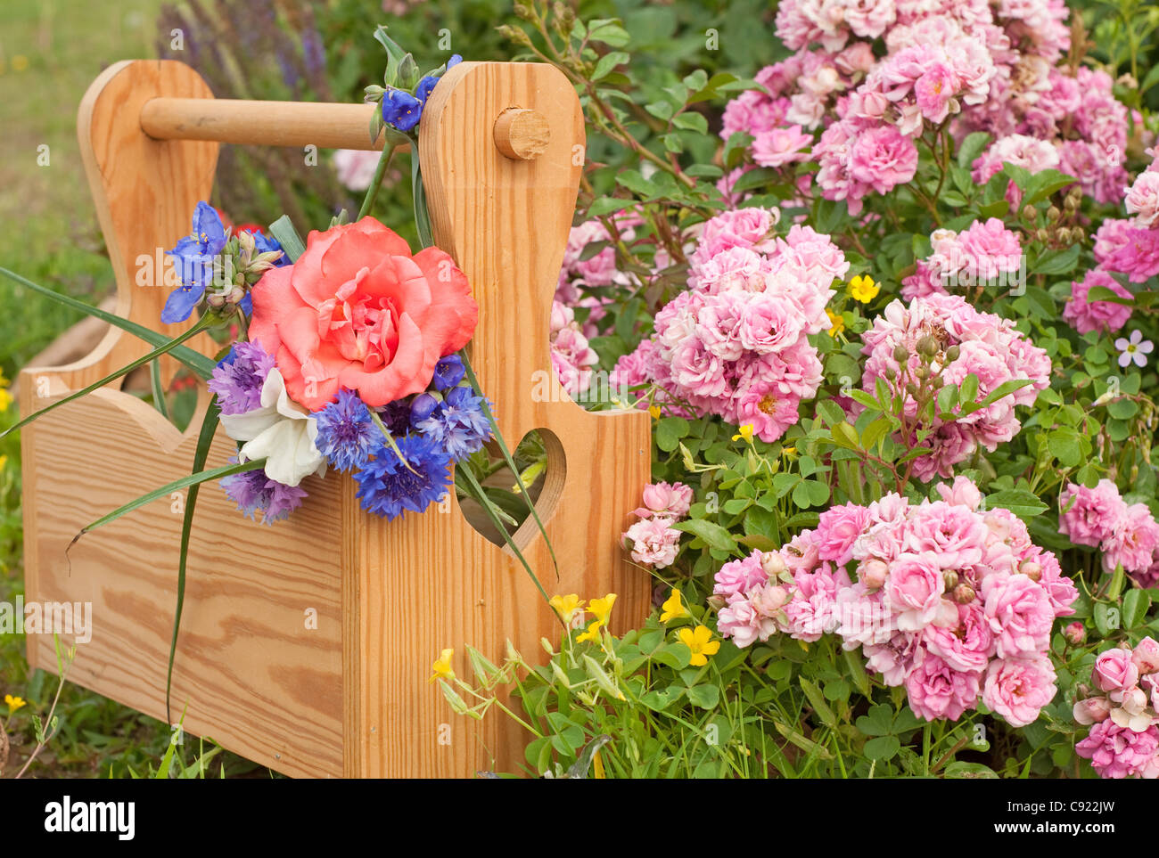 A wooden carrier box with spring flowers, against floral background with pink mini roses - Stock Image