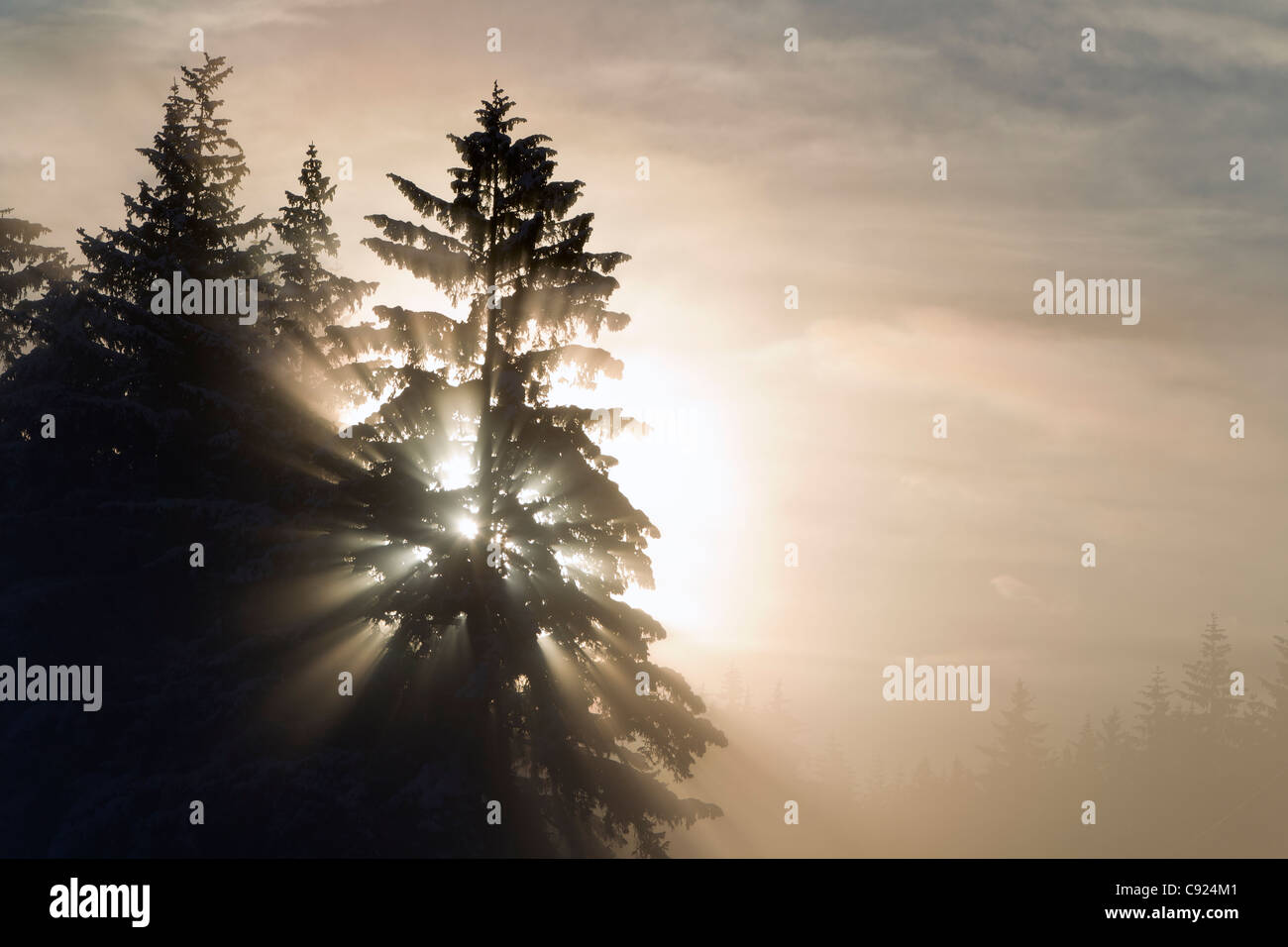 Morning sunrays shine through dense ice fog and trees, Tongass National Forest, Juneau, Southeast Alaska, Winter - Stock Image
