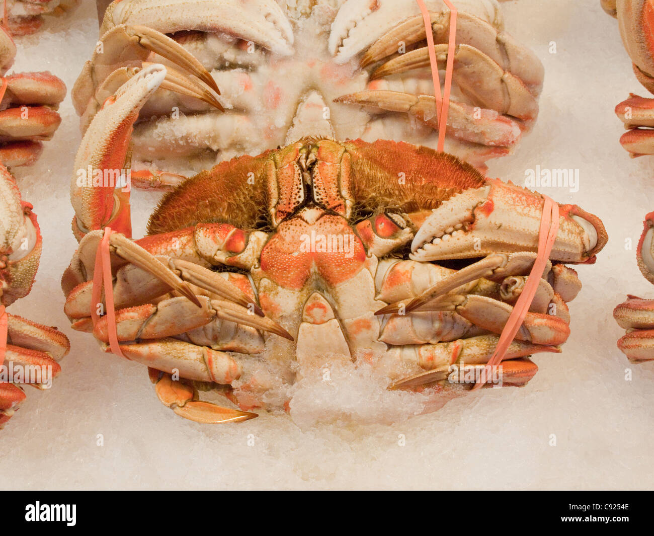 Close up of a whole, cooked Dungeness Crab displayed on ice