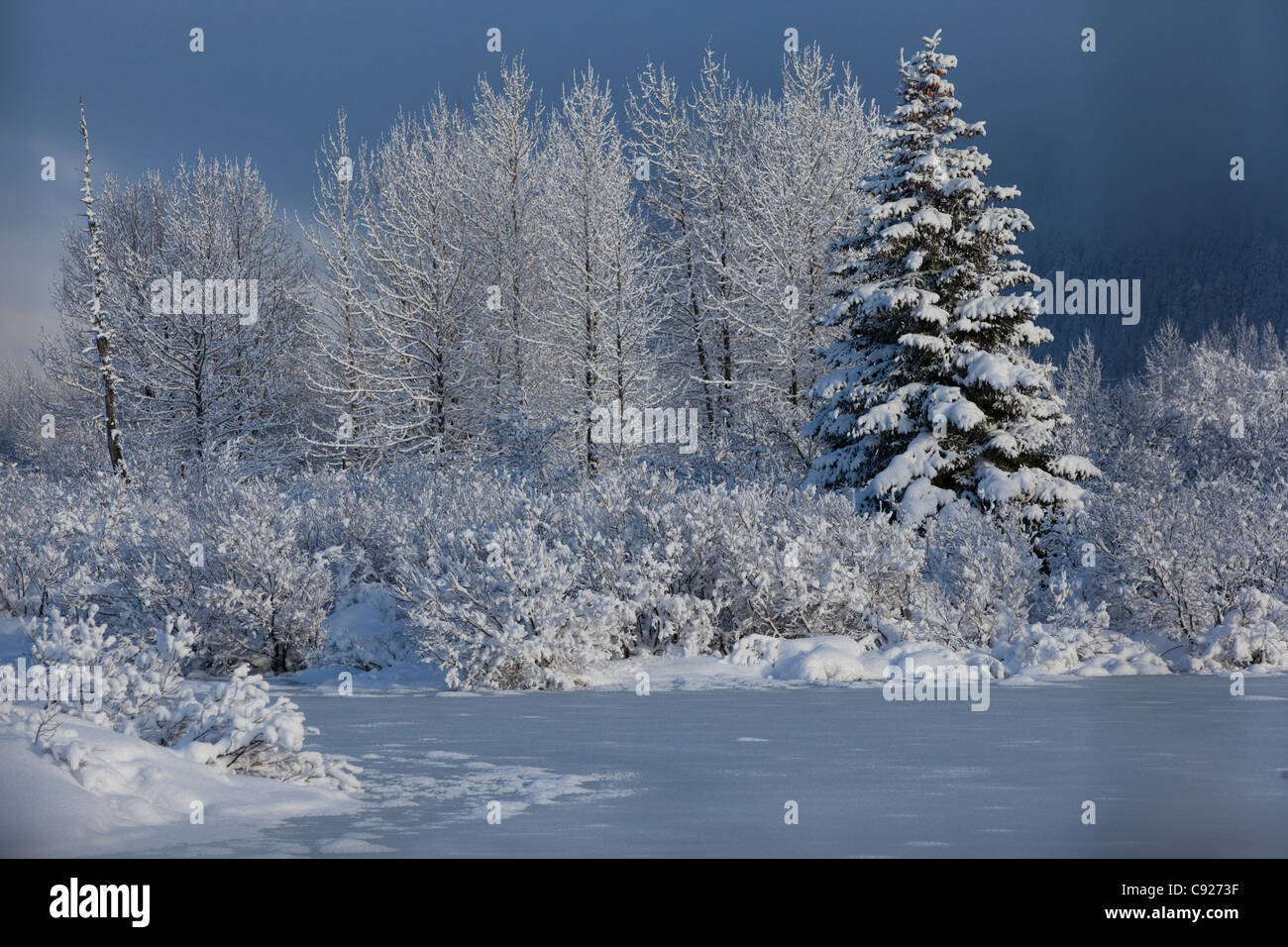 Snowcovered winter scene of a small pond and trees in the Portage Valley, Southcentral Alaska, Winter - Stock Image