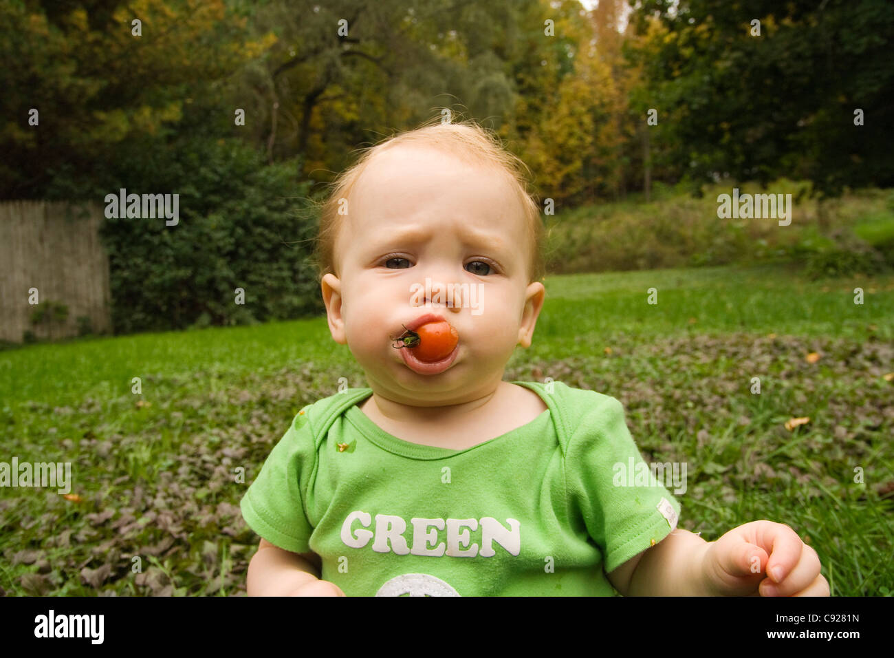 Toddler furrows her brow as she chews a cherry tomato in a back yard garden on a summer afternoon, Maine, USA - Stock Image