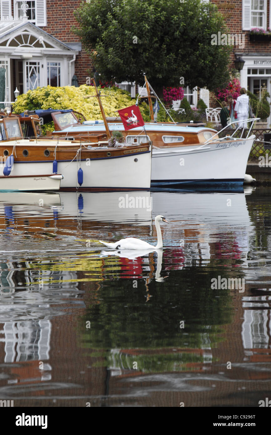 A mute swan passes by vessels moored up outside The Compleat Angler before the start of the day's Swan Upping, - Stock Image