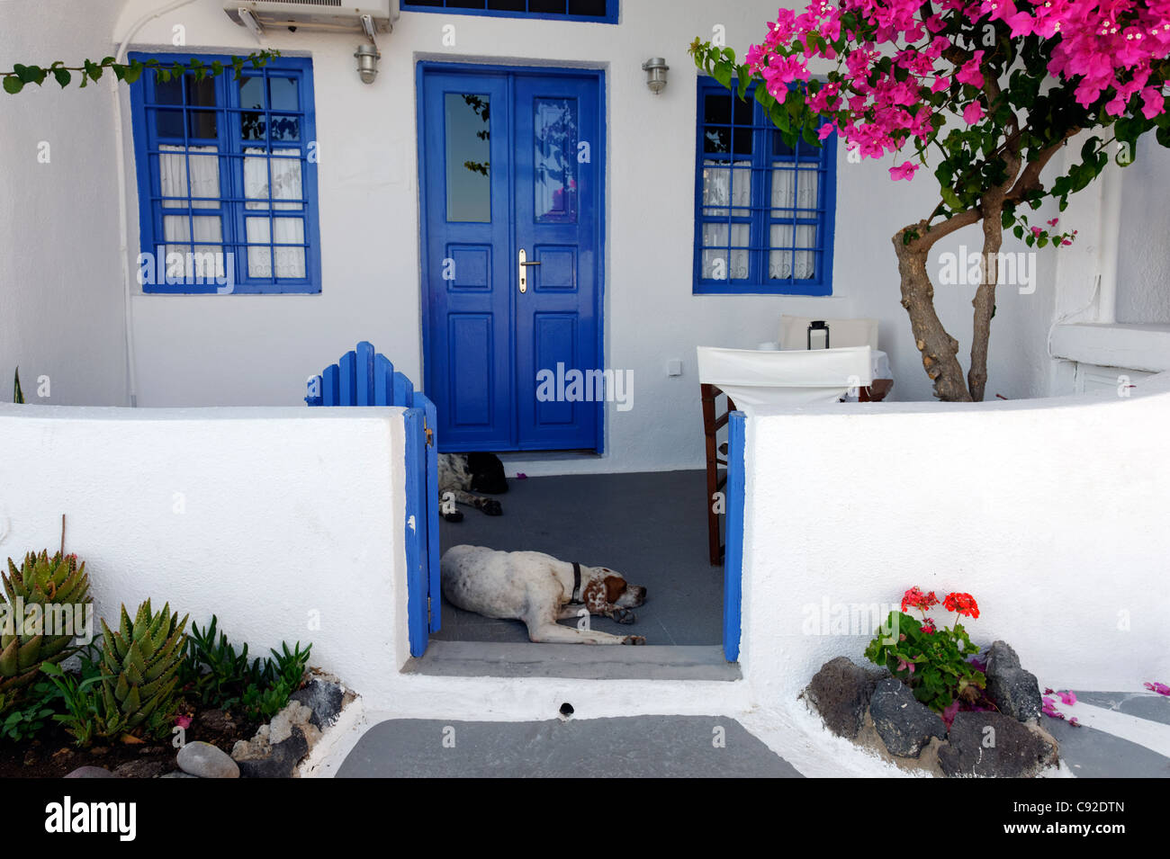 View of a Santorini whitewashed house with blue windows, blue door, blue picket gate, pink bougainvillea and two - Stock Image