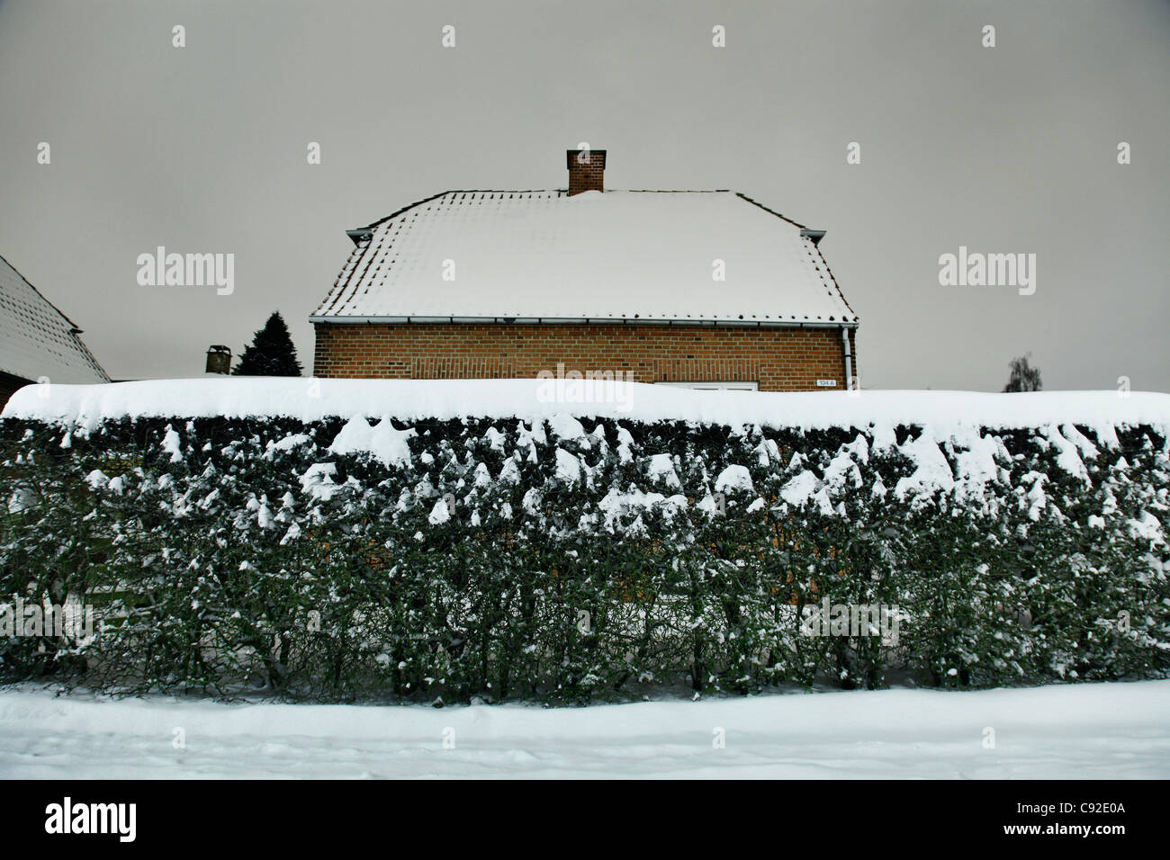 Snow covered bush and house - Stock Image
