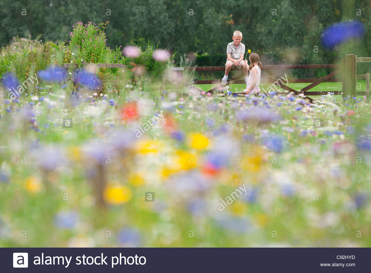 Boy and girl at fence in wildflower field - Stock Image