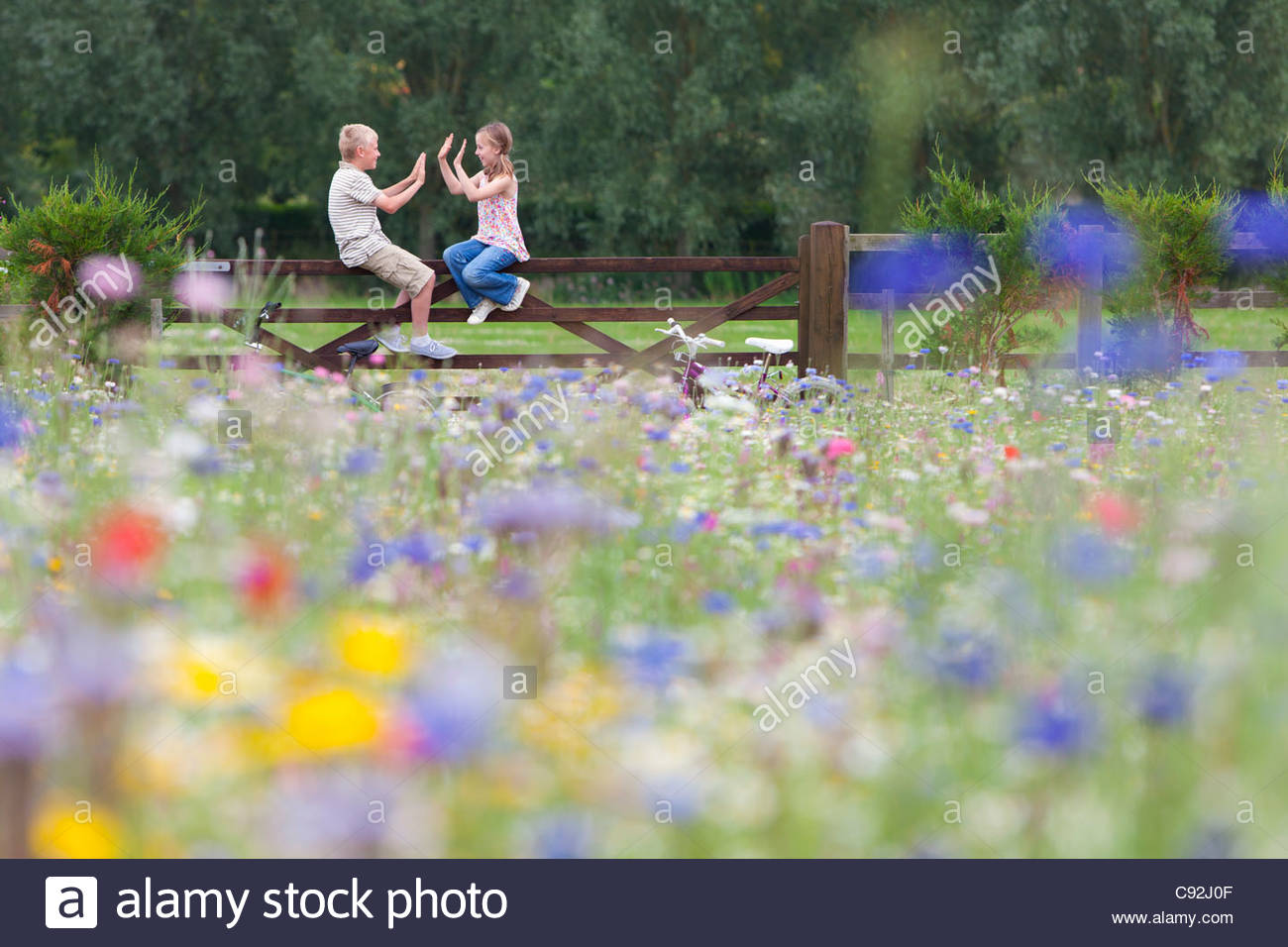 Boy and girl playing clapping game on fence in wildflower field Stock Photo