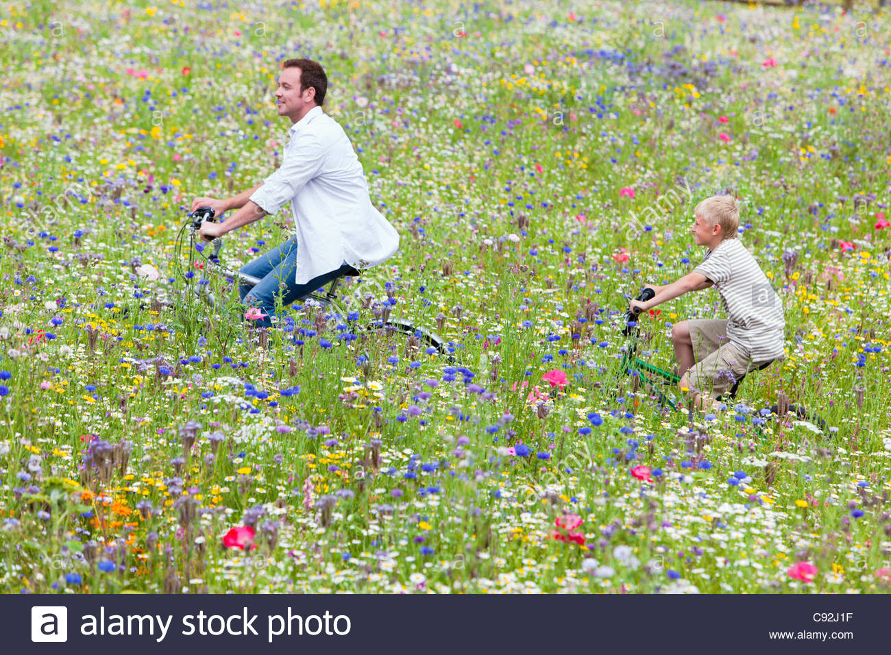 Father and son riding bicycles in wildflower field - Stock Image