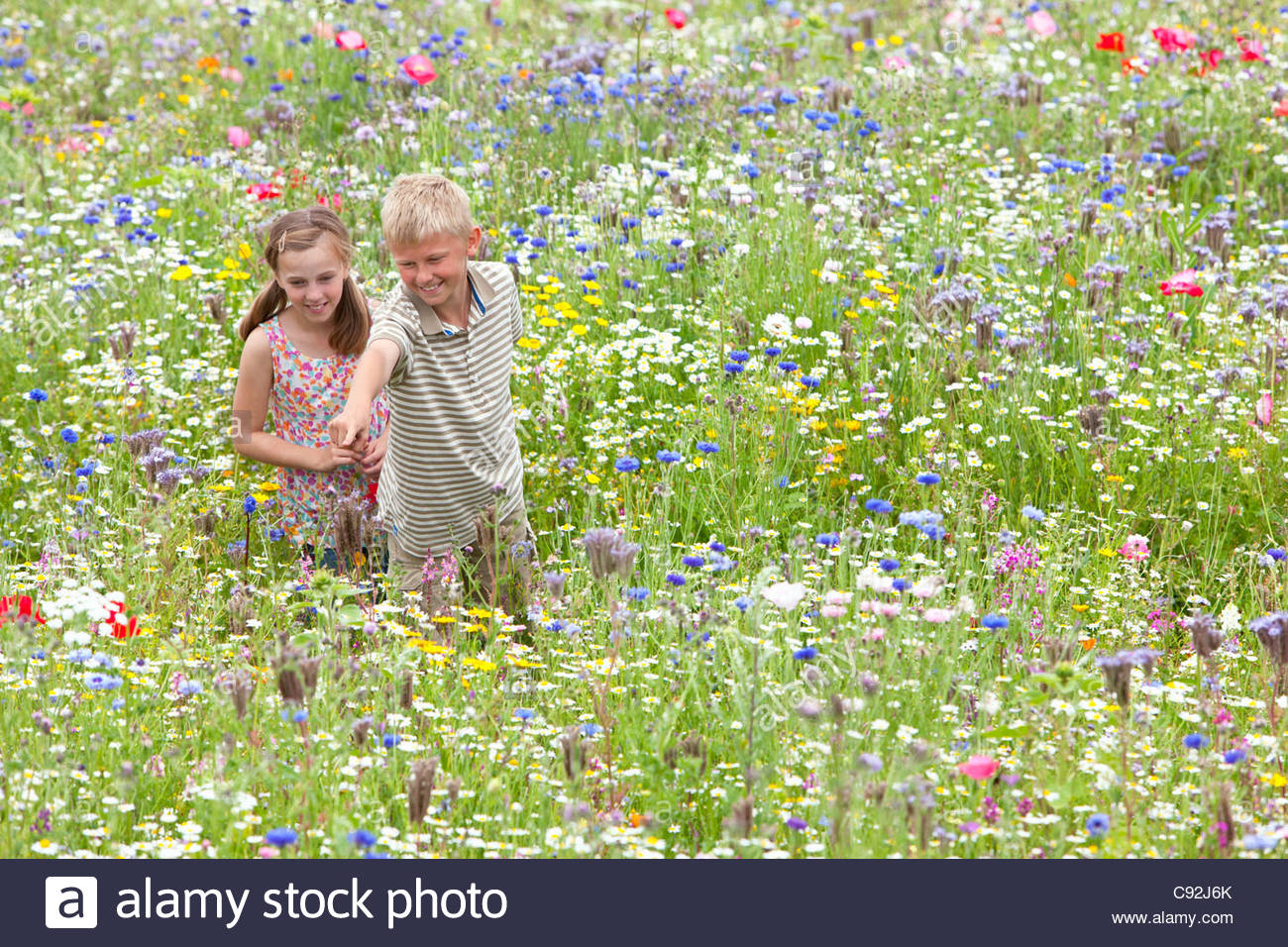 Boy and girl pointing in wildflower field - Stock Image