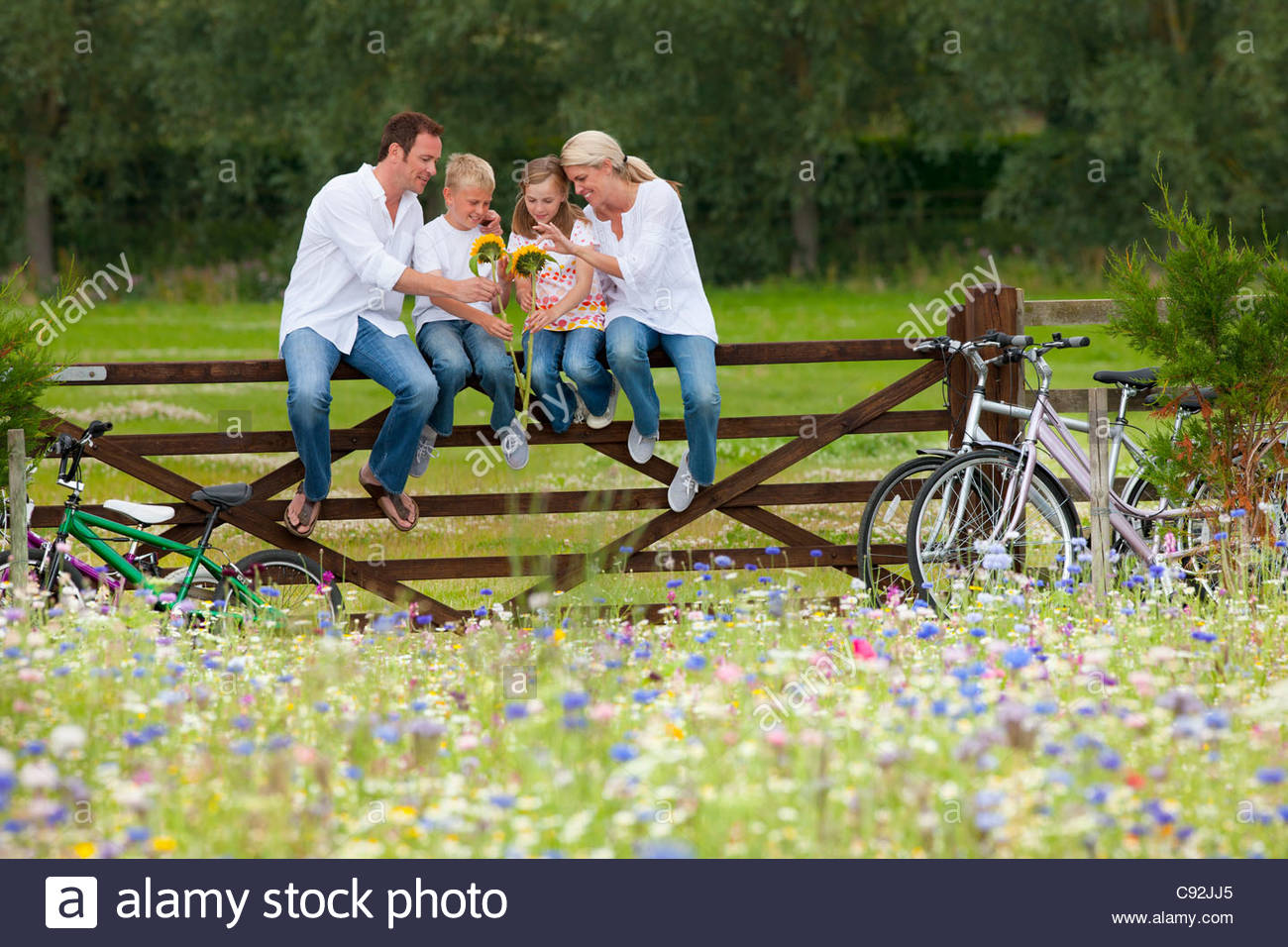 Family with bicycles sitting on fence and looking at sunflowers in wildflower field Stock Photo