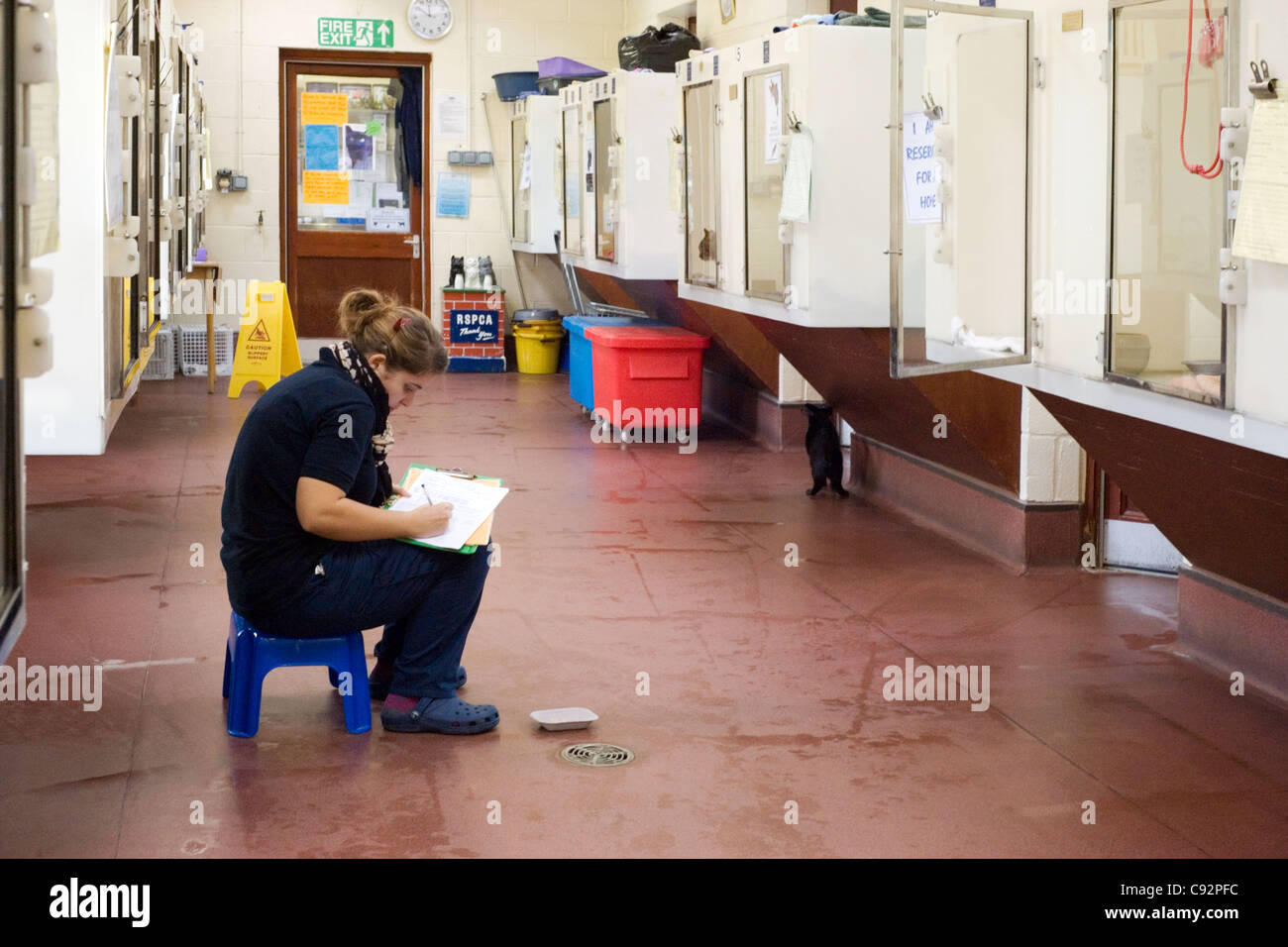 worker looking after cats awaiting rehousing at the rspca run ark shelter stubbington hampshire england uk - Stock Image