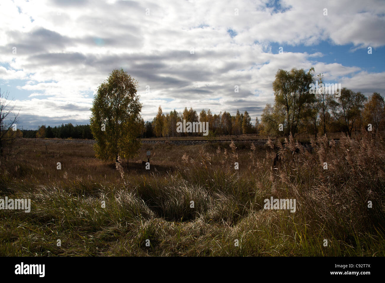 Radioactive countryside in the 10km exclusion zone Chernobyl Ukraine - Stock Image