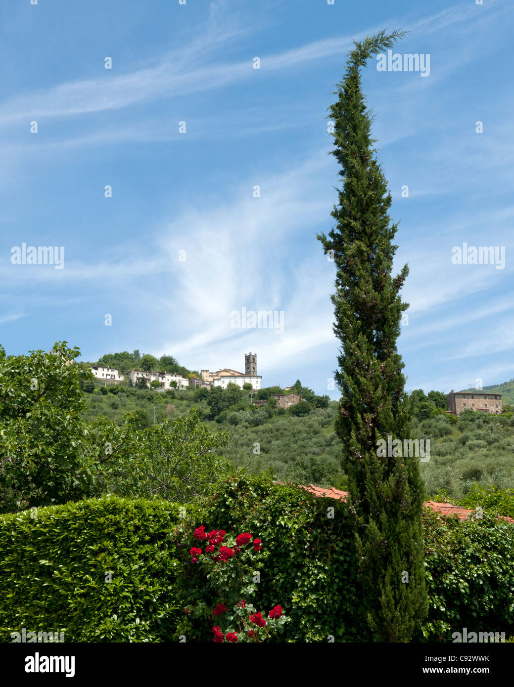 Tuscany is famous for its rolling landscapes small hilltop towns and distinctive cypress trees. - Stock Image