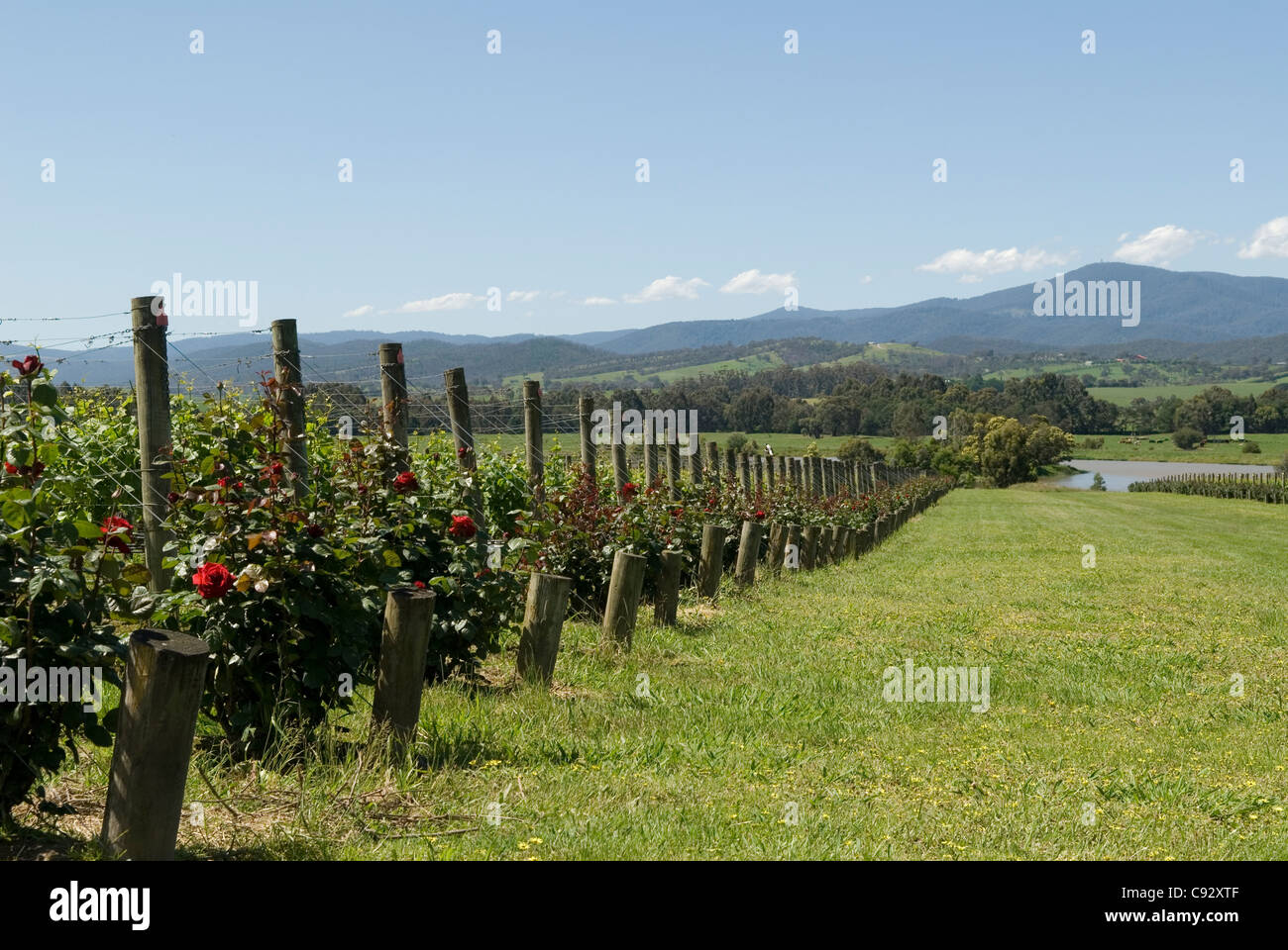 The Yarra Valley is host to a thriving wine growing industry and near the major market of Melbourne. - Stock Image