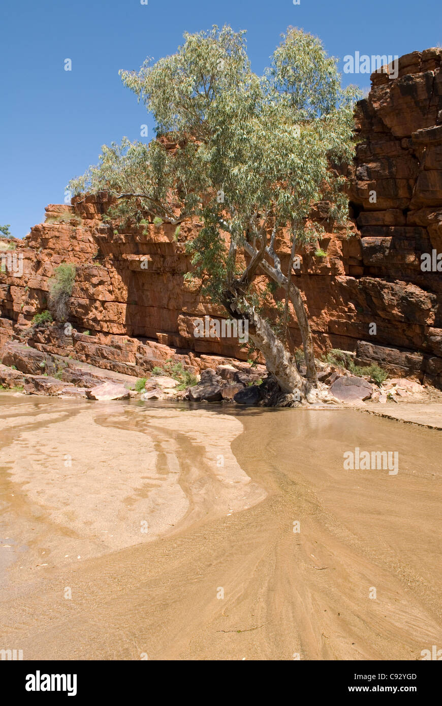 Trephina Gorge, in the East MacDonnell Ranges, is noted for its sheer quartzite cliffs and River Red Gum lined watercourses. - Stock Image