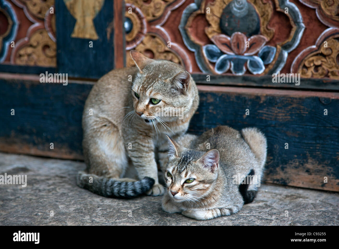 Monastery cats at Trongsa Dzong, a fortress that was built in the 1640s. - Stock Image