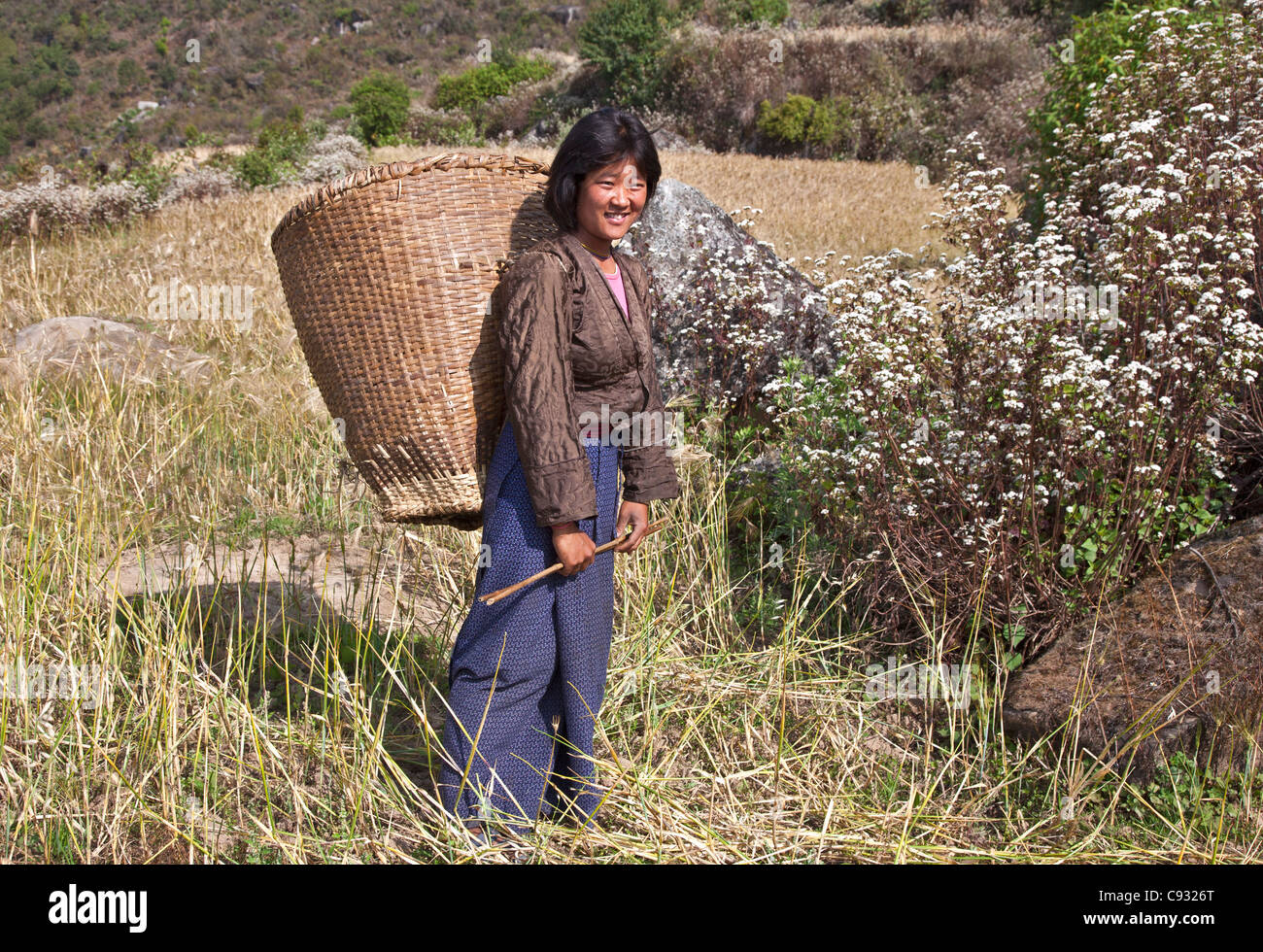 A woman carries ears of corn from her familys hillside farm in the Mangde Chhu Valley in a large bamboo basket. - Stock Image