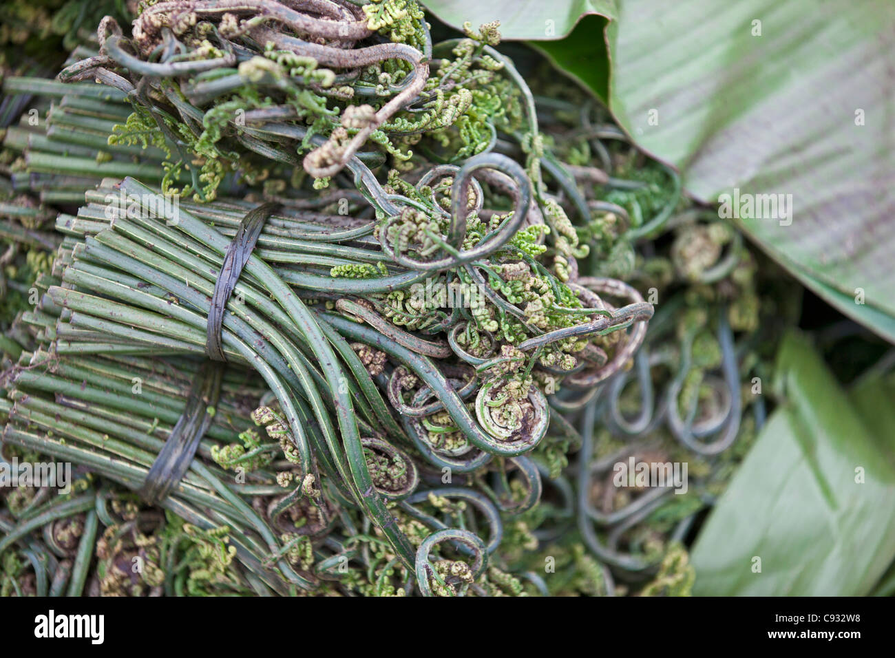 Fiddlehead fern on sale at Paro market.  These greens are a delicious seasonal vegetable in Bhutan. - Stock Image