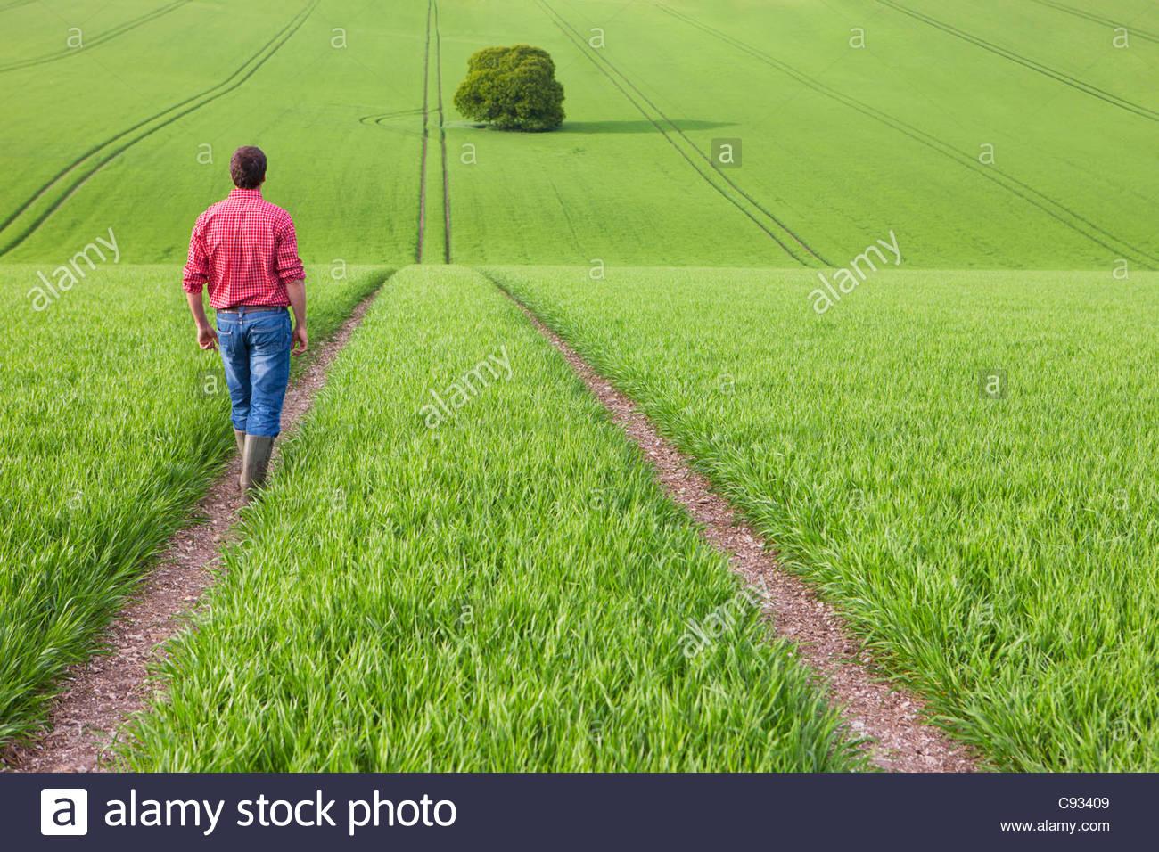 Farmer walking on path in wheat field - Stock Image