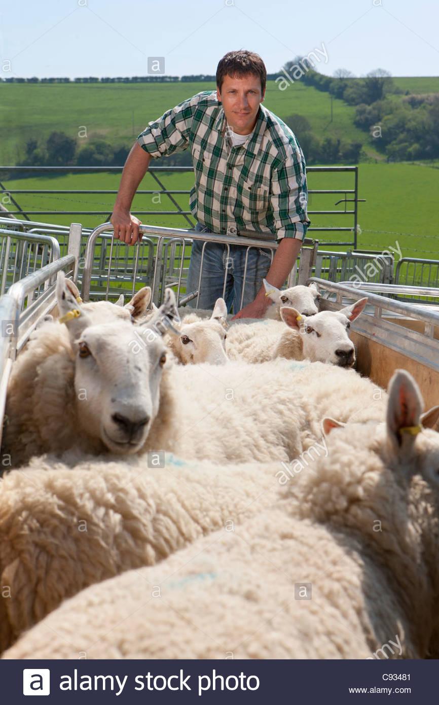 Portrait of shepherd pushing sheep in gated pasture - Stock Image