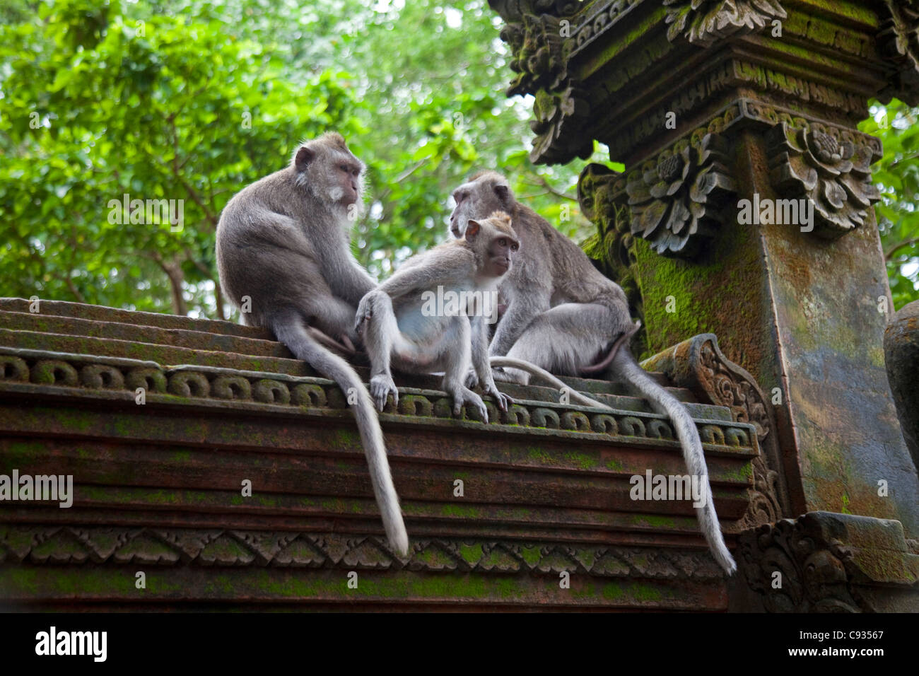 Bali, Ubud. Macaques sitting patiently on a carved wall in Ubud's Sacred Monkey Forest. - Stock Image